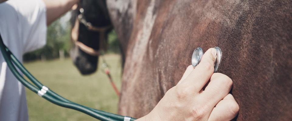 Weterynarz bada konia